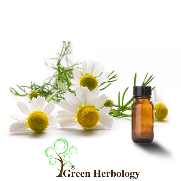 Moroccan Chamomile extract for anti-aging, helps skin glow, brighten hair
