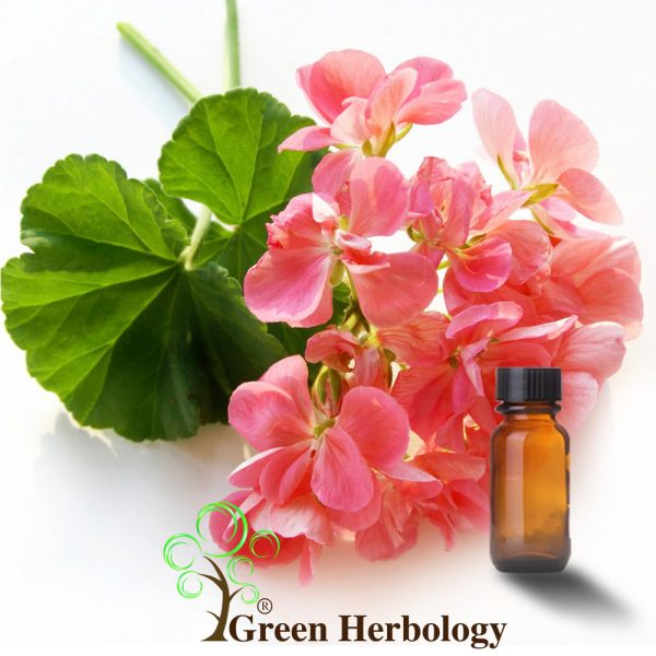 Pure Rose Geranium essential oil for reduce wrinkles,promote hair growth,anti depression