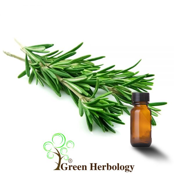 Pure Rosemary Essential Oil for promotes cells growth, anti-aging, stimulate hair growth