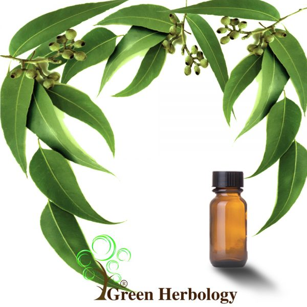 Pure Eucalyptus Essential Oil to treat acne, glowing skin, prevent hair fall