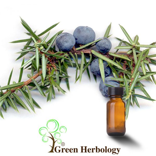 Pure Juniper Berry Essential Oil for skin cells renew, treat acne, prevent hair loss