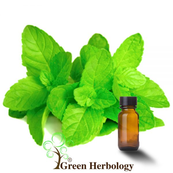 Pure Peppermint Essential Oil to brighten dull skin, narrow skin pores, prevent hair loss