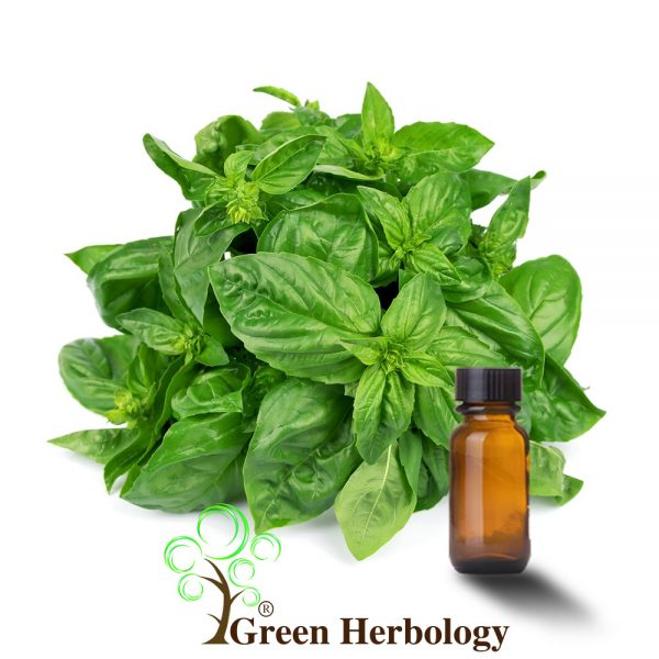 Pure Basil Essential Oil improve tone of skin, hair shine,fight bacteria