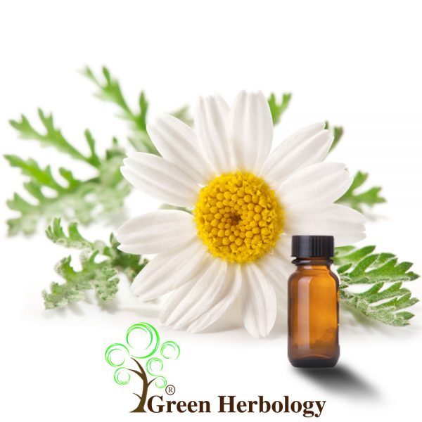 Pure German Chamomile Essential Oil to Diminish scars, tone up skins, kills lice on hair, relief stress