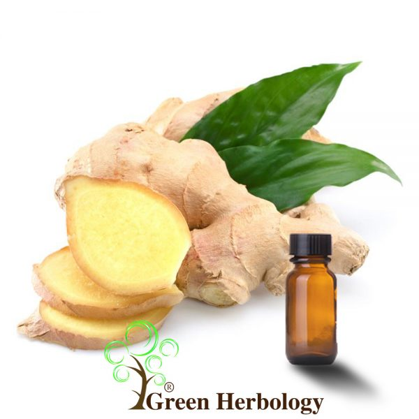 Pure Ginger Essential Oil for Glow Skin,provides antioxidants benefits,Fight bacteria on skin