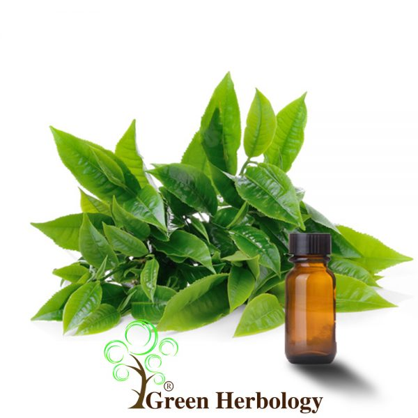 Green Tea extract to remove dead skin cells ,reduce wrinkles, improves tone of skin