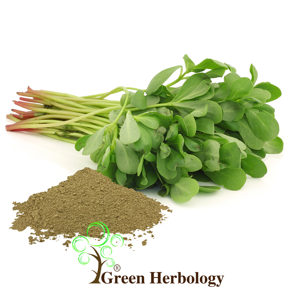 Purslane Portulaca Oleracea Powder Green Herbology