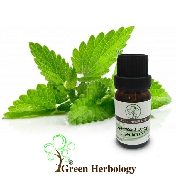 Melissa leaf essential oil lemon balm aromatherapy therapuetic diffuser oil for calming soothing cleansing